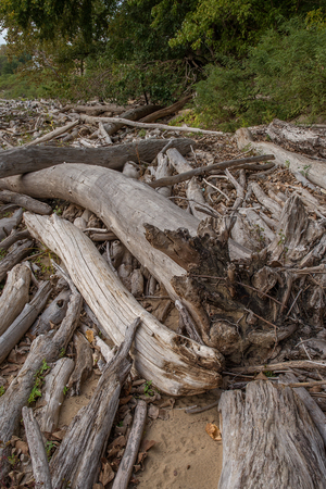 Driftwood at Falls On The Ohio State Park Stock Photo - 74449331