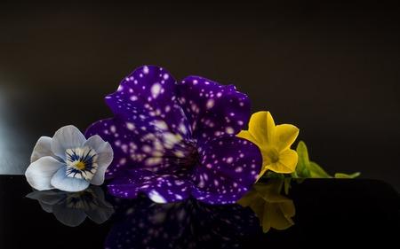 Flowers with reflection in dark studio smartphone