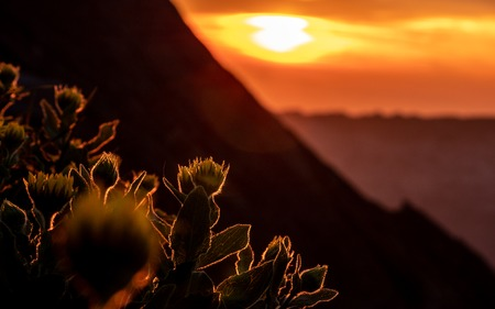 dramatic sunset behind flowers, silhouette of flowers with summer golden sunset shining at flowers brienzer rothorn switzerland Archivio Fotografico