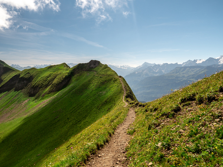beautiful hiking path along a mountain during sunny summer day with cows , ridge walk hohenweg brienzer rothorn
