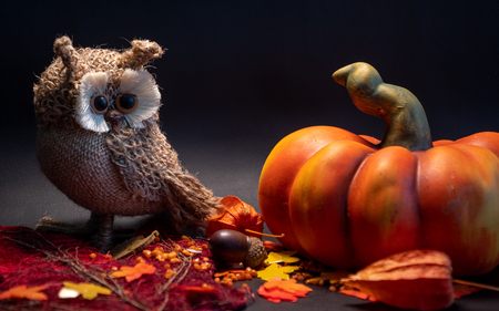 halloween autumn decoration with pumpkin and cute owl on leaves orange colors on black background studio light