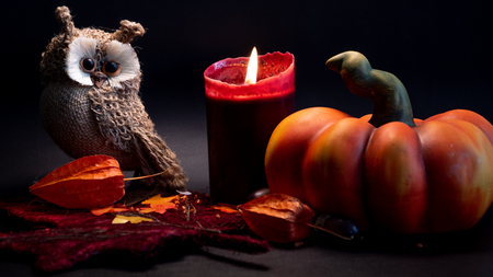 halloween autumn decoration with pumpkin, cute owl and red candle on leaves orange colors on black background studio light