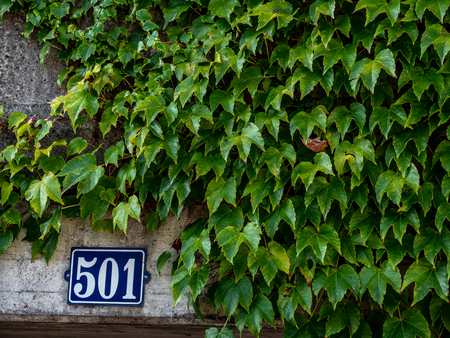 house number 501 at a concrete wall with wall plant covering it up