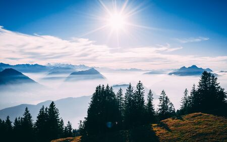aerial Point of interest shot of pine tree with beautiful mountain scenery covered in fog with lake swiss alps rigi, sun shining directly in camera sunny Archivio Fotografico - 131919312