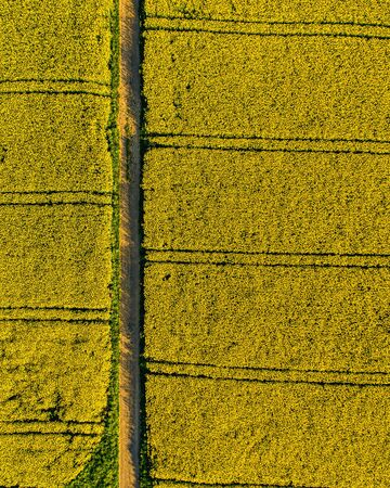 aerial top down view of tractor lines in a rapeseed field with spring yellow flowers in a small village, countryside switzerland Archivio Fotografico