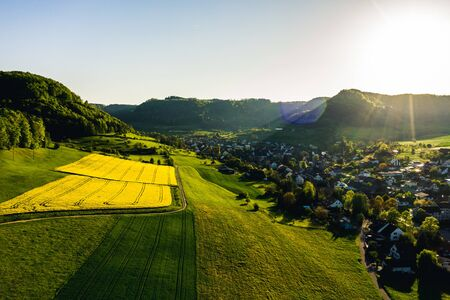 aerial view over very yellow rapeseed field during springtime, aerial view of flower field with tractor lines and path for people, switzerland Archivio Fotografico - 135359821