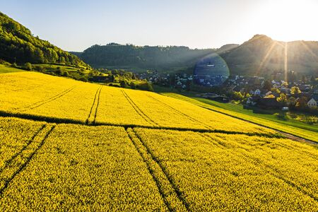 aerial view over very yellow rapeseed field during springtime, aerial view of flower field with tractor lines and path for people, switzerland Archivio Fotografico - 135359820