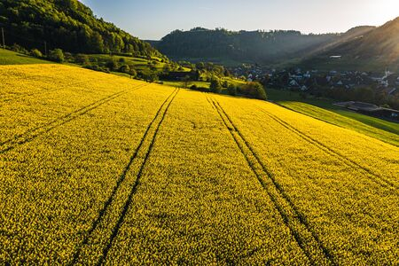 aerial view of yellow flowers in a small village, Field of rapeseed in full flower, spring time in countryside switzerland Archivio Fotografico