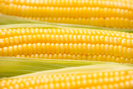 Closeup of Fresh corn on cobs on wooden table. Stock Photo
