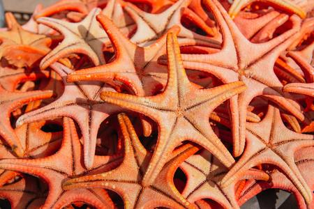 Summer holiday concept. Orange starfish at a seaside souvenir shop Stock Photo