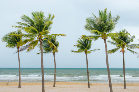 Tropical sea. Coconut trees on the beach.
