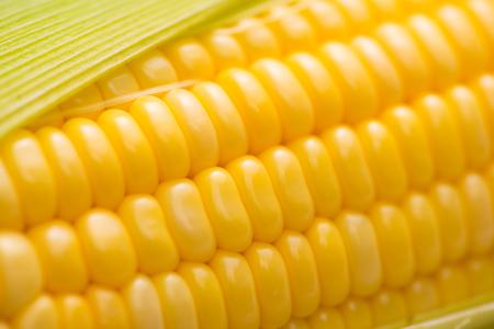 Closeup of Fresh corn on cobs on wooden table. 版權商用圖片