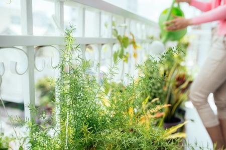 Encantadora joven mujer asiática regar las plantas en un contenedor en el balcón del jardín