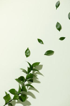 Die Blätter fallen auf einen weißen Hintergrund