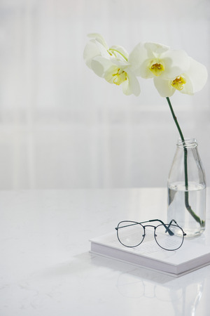 Branch of white orchid in vase on table.