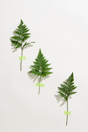 fern branch isolated on white background Stockfoto - 107461756