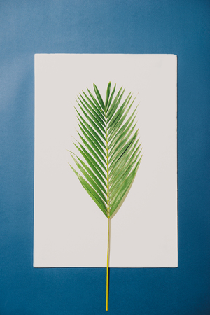 Tropical palm leaves on white background with blue border. Minimal nature. Summer Styled. Flat lay. Stockfoto - 107467937