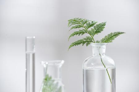 kosmetische Natur Hautpflege und ätherische Öle Aromatherapie .organische Naturwissenschaft Schönheitsprodukt .kräuter alternative Medizin. Attrappe, Lehrmodell, Simulation. Standard-Bild