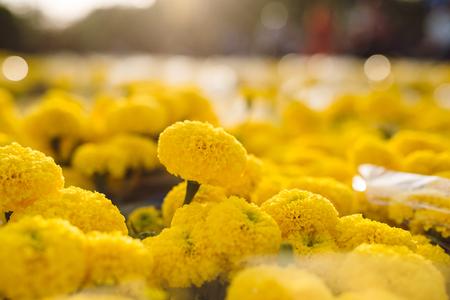 Orange Marigold. Vietnam flower market in Tet holiday/Lunar new year