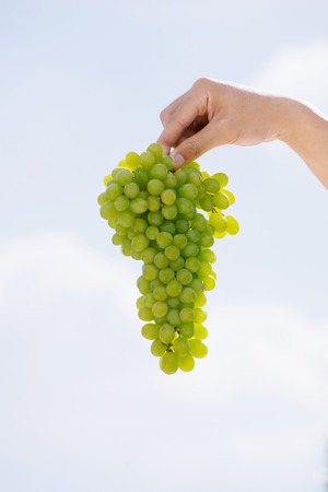 Harvest time, fresh bunch of grapes in human hand. Ripe juicy grapes on a background of the sky