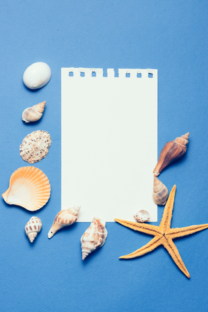 Shells and starfishes on blue wooden background. Copy space for your text.