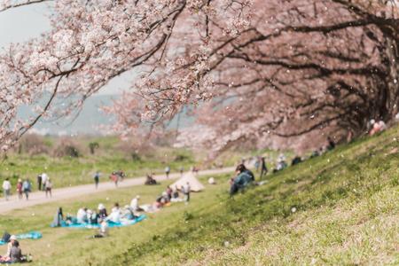 Pink Cherry blossom or sakura flower in spring season at Japan Фото со стока