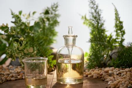 Wissenschaftler mit natürlicher Arzneimittelforschung, natürlicher organischer Botanik und wissenschaftlichen Glaswaren, alternativer grüner Kräutermedizin, natürlichen Hautpflege-Schönheitsprodukten, Forschungs- und Entwicklungskonzept.