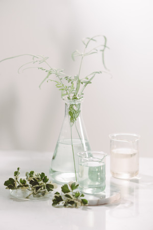 Perfume oils concept. Laboratory glassware with infused floral water on table Stockfoto