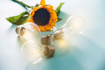 light bulbs with sunflower on blue background