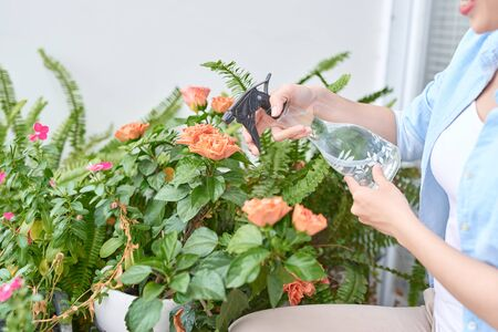 Garden work. Protection against diseases and insects by spraying with protective measures.