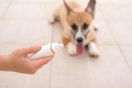 Dog grinding toenails in hand Stockfoto