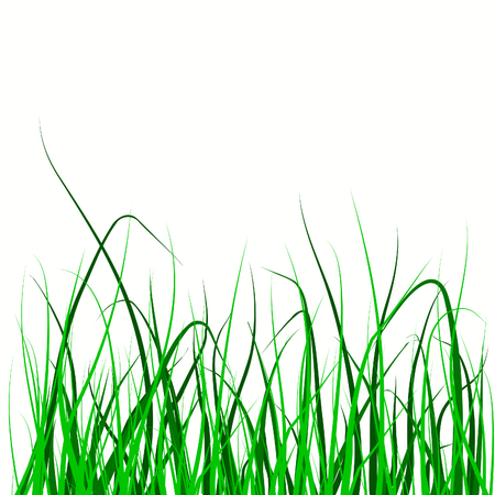 Vector illustration of a field of grass on white