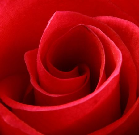 extreme macro of a bright red rose