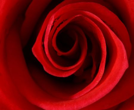 extreme macro of a red rose Stock Photo