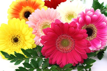 arrangement of gerbera flowers over a white surface Stock Photo