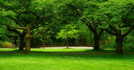 formed: green landscape formed by beautiful trees