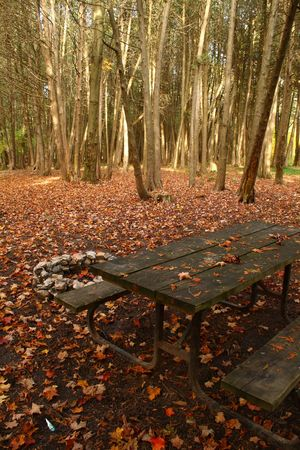 pit fall: campsite in a park with a table and a fire pit