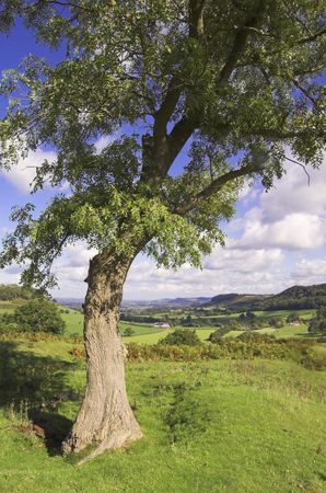 cotswold: Downham Hill, near Dursley, Gloucestershire, England. Stock Photo