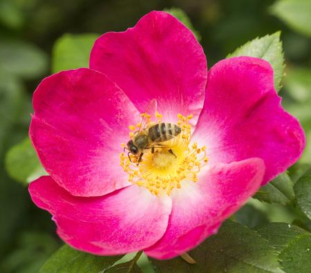 blte: Bee on bloom