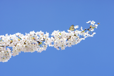Bee and blossoming of the trees