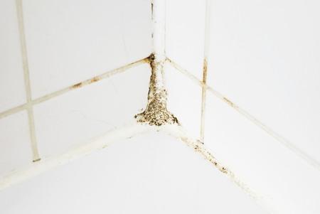 타일과 실리콘에 욕실에 곰팡이 스톡 콘텐츠 - 80197748