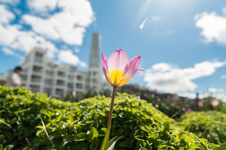 twisty: A tulip and Turning Torso