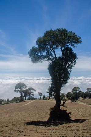 Natural National ecological park of Irazu at Costa Rica