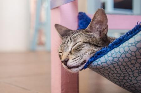 Funny feline resting close up