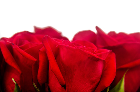 Picture of Bouquet of red roses with white background 版權商用圖片