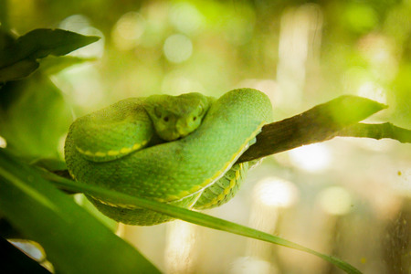 limbless: Green snake at Amazon Forest Stock Photo