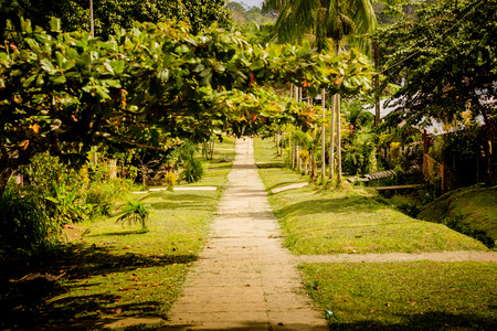 amazon forest: rural asphalt road through the green field in the jungle Stock Photo
