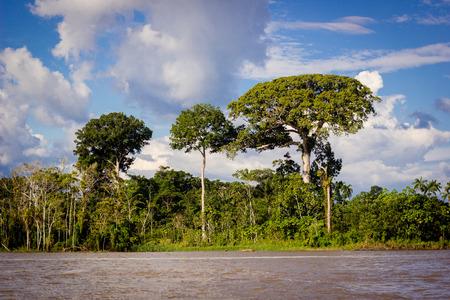 río amazonas: Río de la selva amazónica Foto de archivo