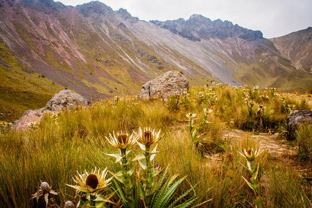 nevado: Wild flowers in a moutain