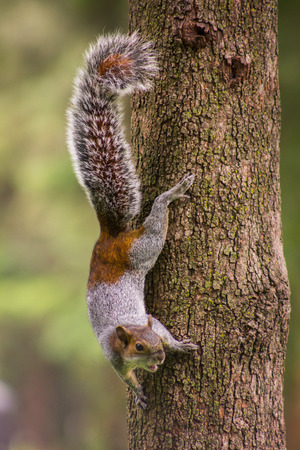 Squirrel on a lodge
